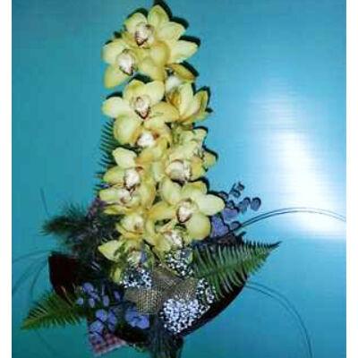 Ali Baba - Orchidea 01