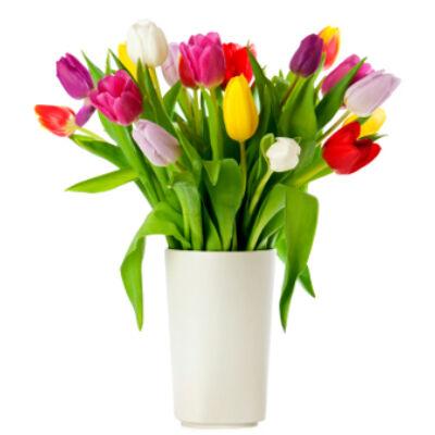 Anyák napjára - 15 szál tulipán